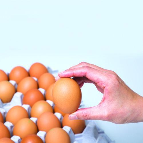 '완전식품' 닭알,잘 고르기와 보관하기