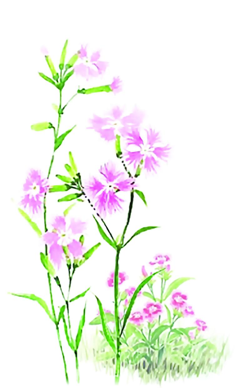 패랭이꽃 (외 3수)□ 백진숙