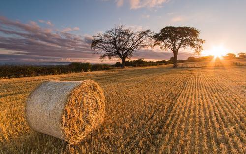 혁신조치로 농촌환경 다스린다'이온광화'기술로 농작물대 쓰레기 처리