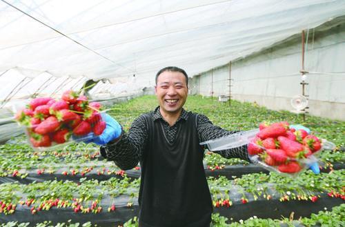 록색 과일, 야채 농업