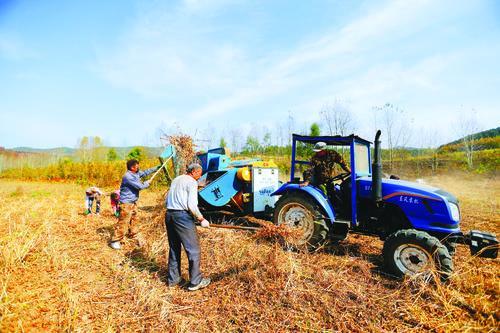 콩수확 작업 한창