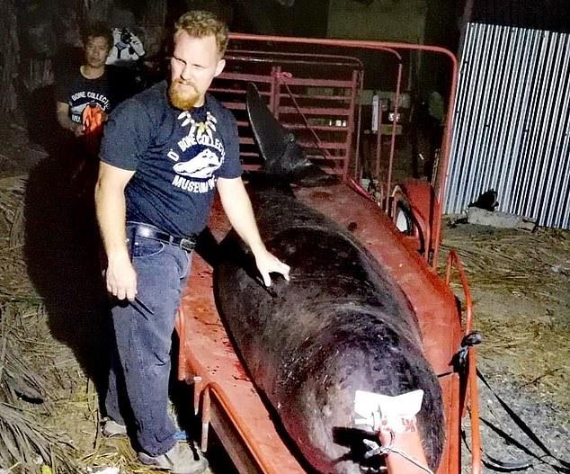 배 속에 플라스틱 쓰레기 40㎏… 피 토하며 죽은 고래