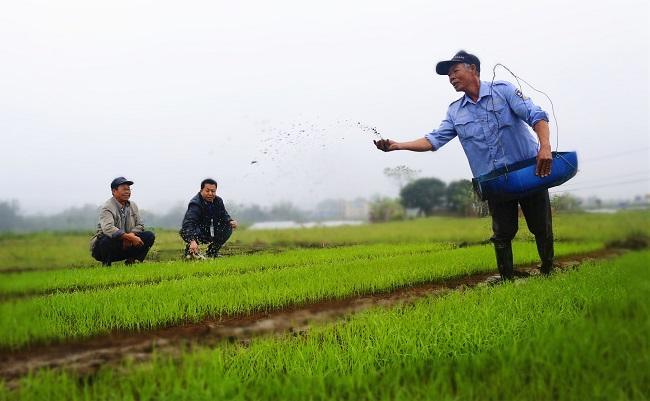중앙재정 농업에로 류동: 올해 180억원 농기계구매보조금 배치 계획